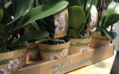 Orchids Services exclusieve leverancier van nieuwe duurzame Phalaenature-lijn